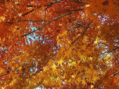 相模原北公園の水面に反射した光が当たる紅葉