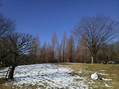 相模原北公園の雪景色