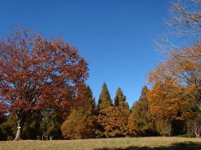相模原北公園の紅葉2013年11月22日