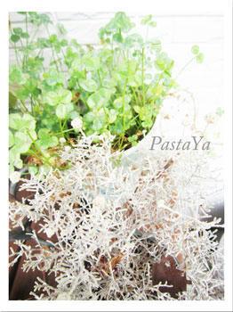 pastaya-blog97.jpg