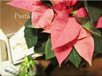 pastaya-blog209.jpg