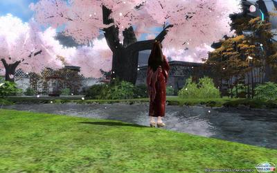 桜舞い散る空間