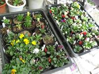 ポット鉢の苗たち1