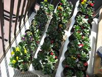 ポット鉢の苗たち2