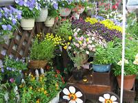我が家の庭2009年5月