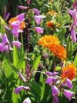 金盞花と紫蘭