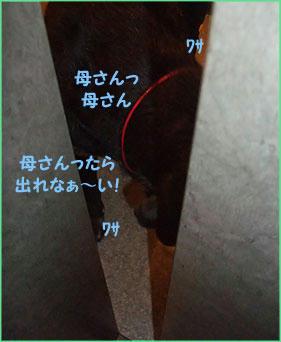 091027_7.jpg