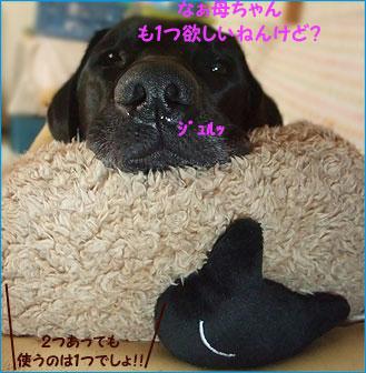 091104_9.jpg