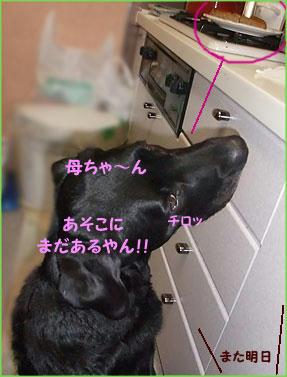 100304_10.jpg