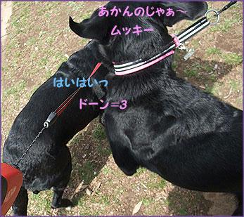 100324_7.jpg