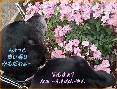100531_4.jpg