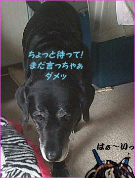 100603_8.jpg