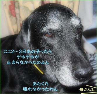 110304_1.jpg