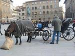 フィレンツェ(Firenze、Florence)の馬車