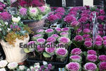 なばなの里の花市場