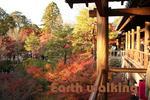 東福寺の通天橋からの紅葉