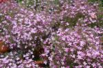 『なばなの里』の花市場