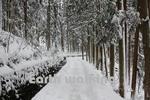 地獄谷の雪景色