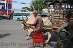 ニゴンボ(Negombo)の牛引き