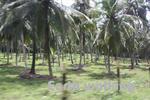 スリランカの郊外