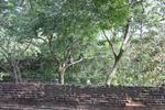 シーギリヤロック(Ancient City of Sigiriya)の野生の猿