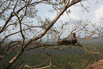 シーギリヤロック(Ancient City of Sigiriya)のお猿さん