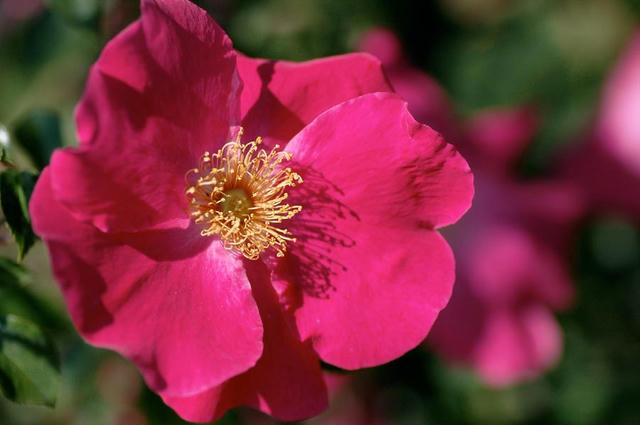 070520pD7_2954R_anemoneflora_e.jpg