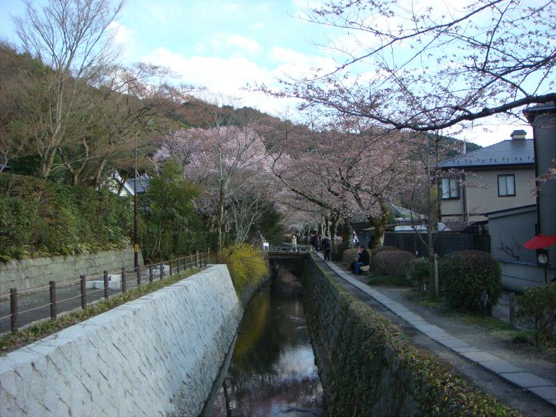 kyotosakura05.jpg