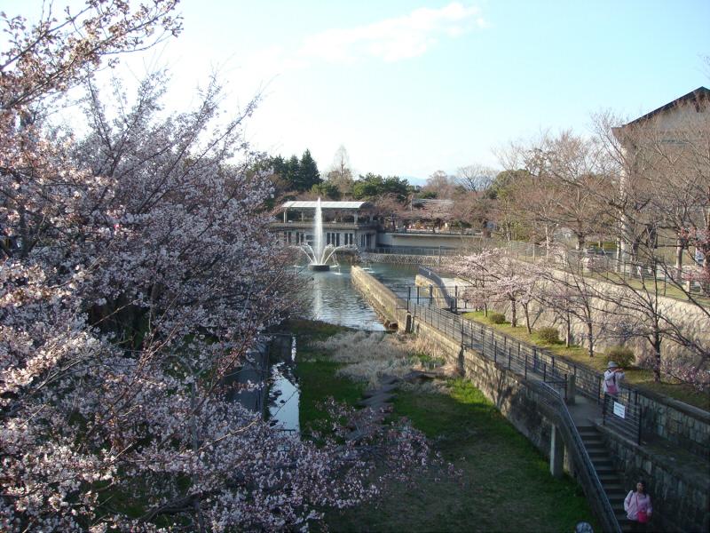 kyotosakura07.jpg