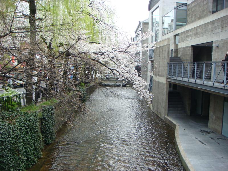 kyotosakura012.jpg