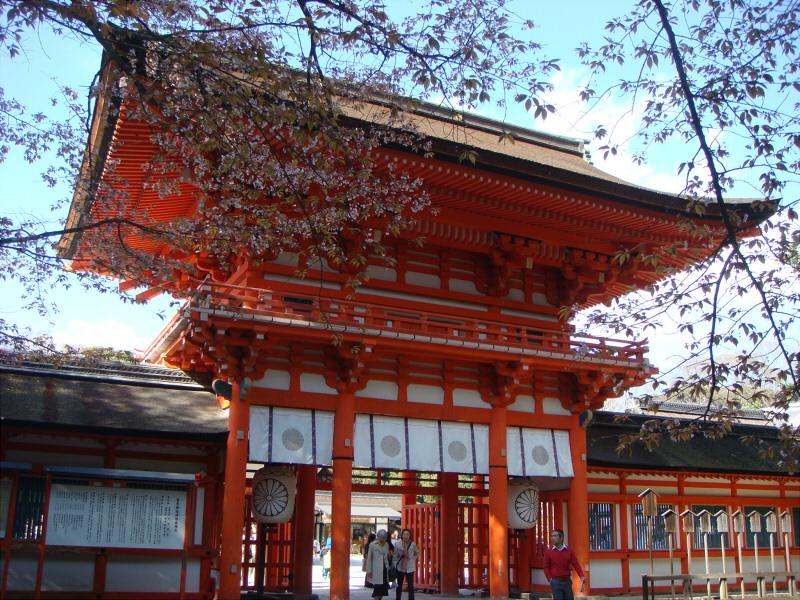 kyotosakura11.jpg