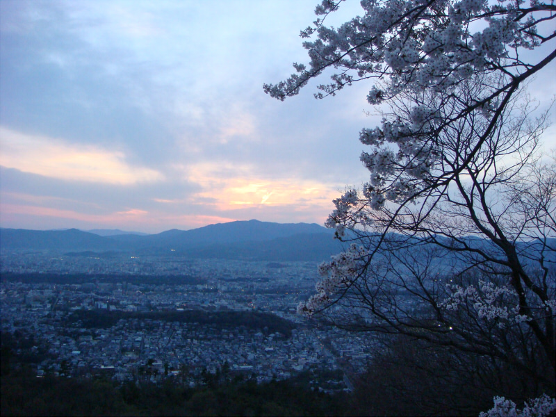 kyotosakura019.jpg