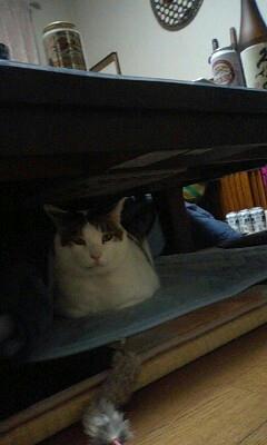 机の下のカンタ