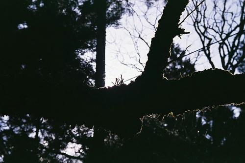 愛宕山 木と苔
