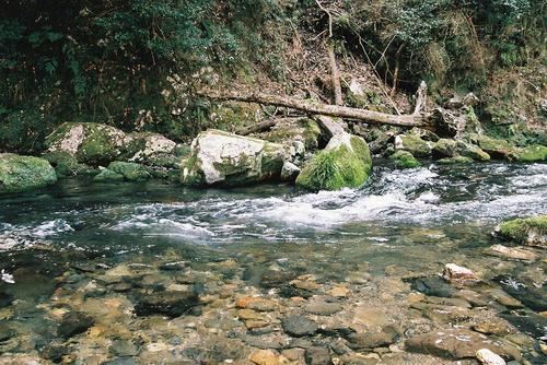 京都 清滝川.jpg