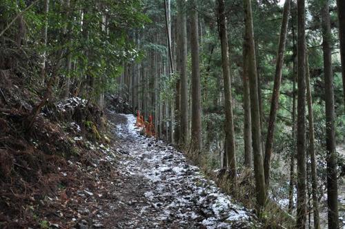 京都 清滝川 京都一周トレイル 冬 雪