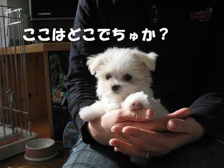 IMG_0425_R.jpg