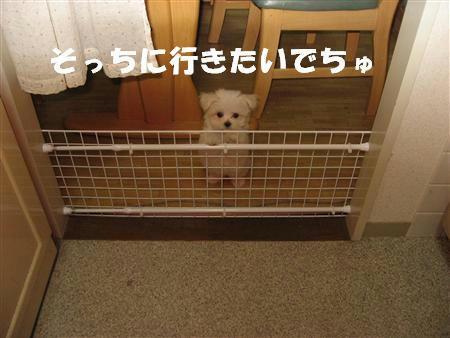IMG_0465_R.jpg