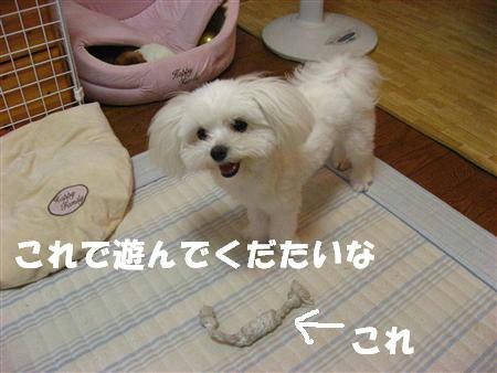 IMG_0871_R.jpg