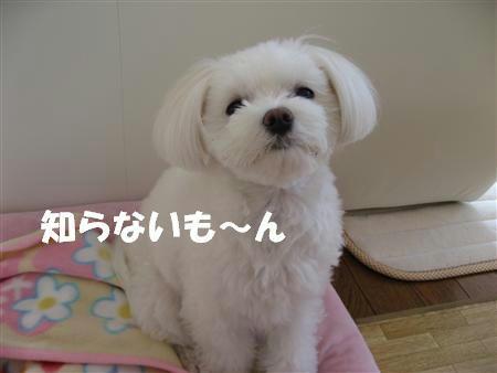 IMG_5080_R.jpg