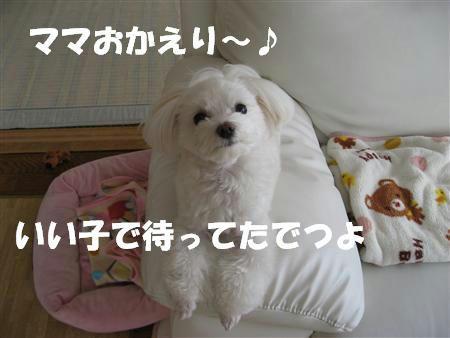IMG_5091_R.jpg