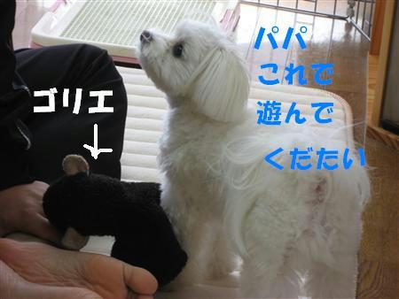 IMG_5103_R.jpg