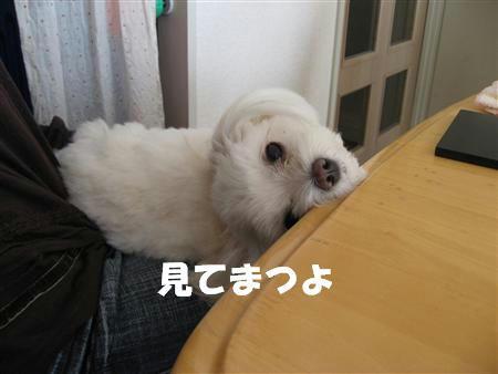 IMG_5194_R.jpg