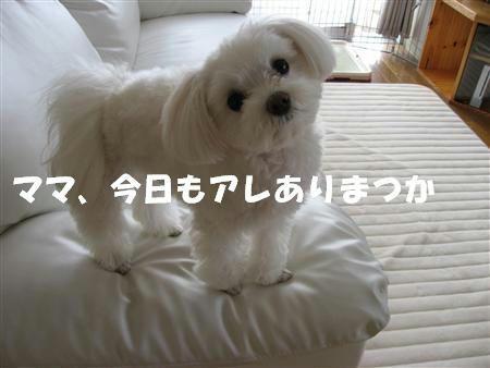 IMG_5189_R.jpg