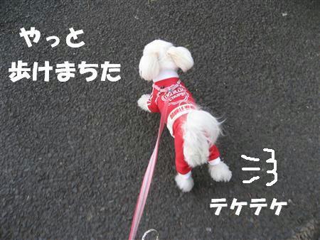 IMG_5266_R.jpg