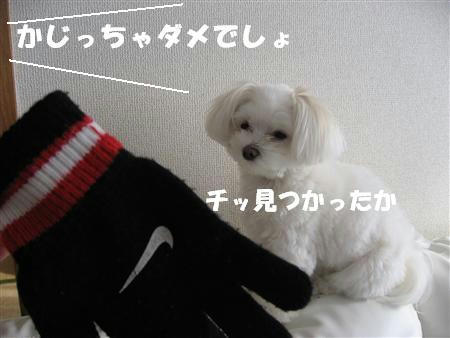 IMG_5294_R.jpg