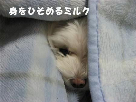 IMG_5378_R.jpg