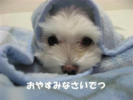 IMG_5387_R.jpg