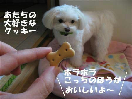 IMG_5370_R.jpg