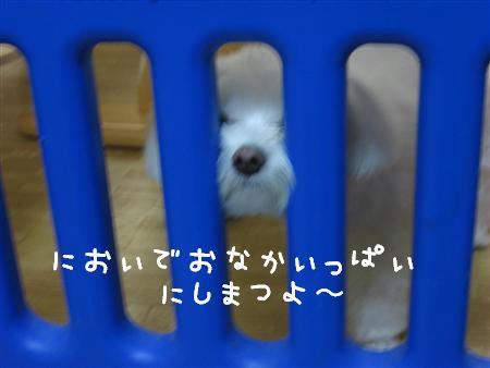 IMG_5340_R.jpg